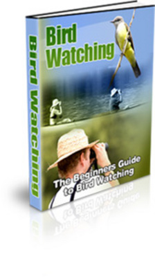 Pay for Bird Watching Guide for Beginners