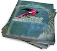 Thumbnail 50 Fly Fishing Extravaganza Articles + (Xtreme Article Write