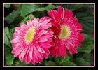 Thumbnail Blüten gerahmt 2