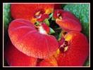 Thumbnail Blüten gerahmt 3