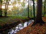 Thumbnail Waldlichtung mit Bachlauf