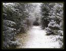 Thumbnail Wintertraum