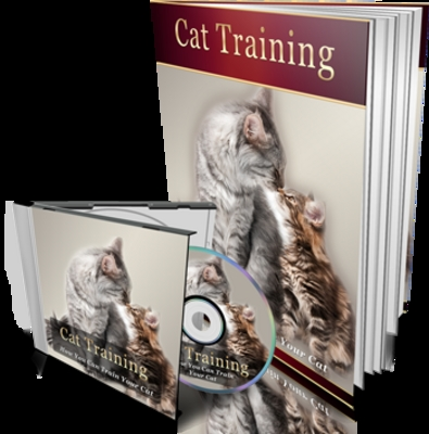Pay for Cat training   Audio