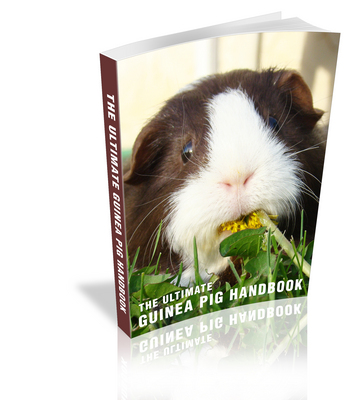 Pay for The Ultimate Guinea Pig Handbook