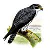 Thumbnail Bird Lithographs jpg.zip