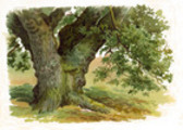 Thumbnail TREES AND HOW TO PAINT  THEM IN WATERCOLOURS