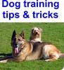 Thumbnail Dog training tips & tricks