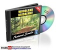 Thumbnail Woodland Bridalway Natural Sounds Royalty Free MRR!