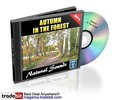 Thumbnail Autumn In The Forest Natural Sounds Royalty Free MRR!