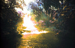 Thumbnail Molten Gold Tabacon Sunset