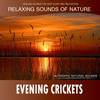 Thumbnail Evening Crickets (Sounds of Nature) - RINGTONE