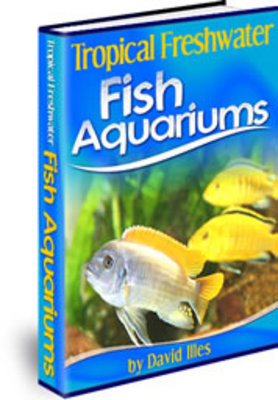 Pay for Your Guide to Tropical Freshwater Fish Aquariums