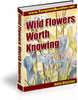 Thumbnail Wild Flowers Worth Knowing