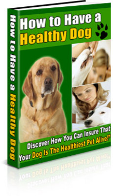 Pay for How to Have a Healthy Dog (PLR)