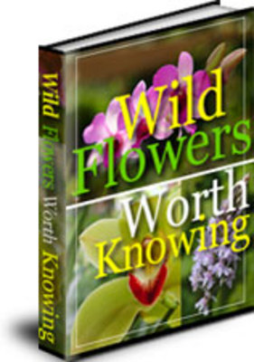 5698041 wildflowers1 book medium *NEW!* Wild Flowers Worth Knowing   Discover the Secrets to Wildflowers