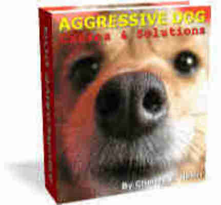 *NEW!* Aggressive Dog (Causes & Solutions)