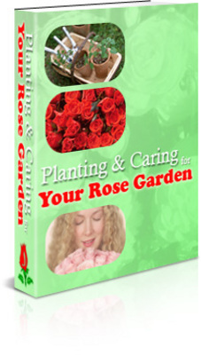 Pay for Planting & Caring for Your Rose Garden