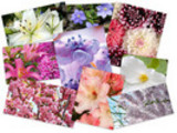 Thumbnail 45 Eximious Flowers HD Wallpapers