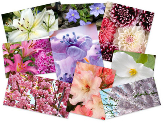Pay for 45 Eximious Flowers HD Wallpapers