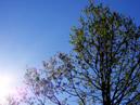 Thumbnail Pájaros en Mayo. Sonidos para Relajación (MP3)