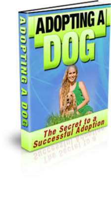 Pay for The New Dog - Adopting A Dog