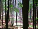 Thumbnail Wood