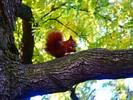 Thumbnail Squirrel