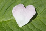 Thumbnail Heart