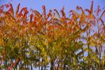 Thumbnail Fall colors