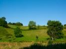 Thumbnail Meadow