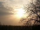 Thumbnail Sun behind the tree