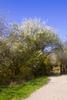 Thumbnail Gate to spring