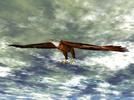 Thumbnail Eagle