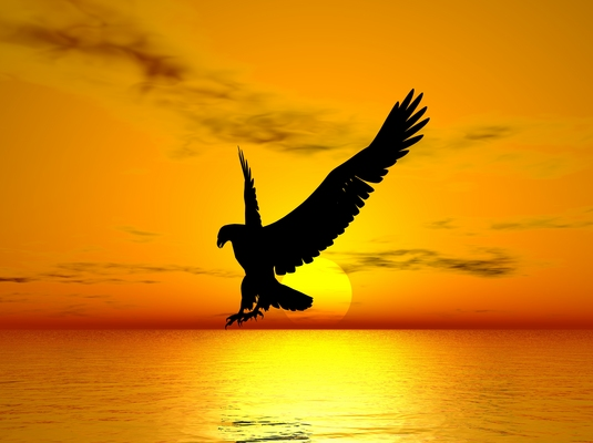 Flying eagle download illustration pay for flying eagle altavistaventures Gallery