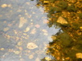 Thumbnail Stones in the clear water - Cradle Mountain Tasmania
