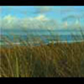 Thumbnail Royalty Free Stock Footage: New Zealand Surf Beach: NL00013