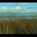 Thumbnail Royalty Free Stock Footage: New Zealand Surf Beach: NL00013