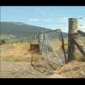 Thumbnail Royalty Free Stock Footage: New Zealand Farmland: NL00029