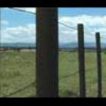 Thumbnail Royalty Free Stock Footage: New Zealand Farmland: NL00040