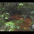 Thumbnail Royalty Free Stock Footage : Rain Forest : NL00049
