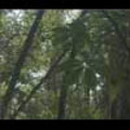 Thumbnail Royalty Free Stock Footage : Rain Forest : NL00050
