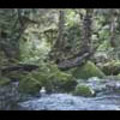 Thumbnail Royalty Free Stock Footage: New Zealand: NL00068
