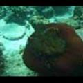 Thumbnail Royalty Free Stock Footage: Fish: NL00148