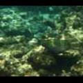 Thumbnail Royalty Free Stock Footage: Fish: NL00149