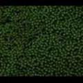 Thumbnail Royalty Free Stock Footage: Vegetation: NL00156