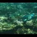 Thumbnail Royalty Free Stock Footage: Fish: NL00158