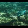Thumbnail Royalty Free Stock Footage: Fish: NL00158