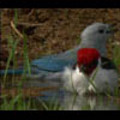 Thumbnail Royalty Free Stock Footage: Venezuela: NL00432