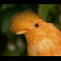 Thumbnail Royalty Free Stock Footage: Venezuela: NL00437