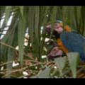 Thumbnail Royalty Free Stock Footage: Venezuela Birds: NL00443